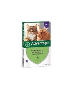 Advantage*spot-on Soluz 4 Pipette 0,8 ml 80 mg Gatti e Conigli Grandi