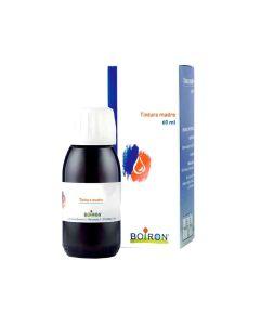 Ribes Nigranulium Tintura Madre 60 ml